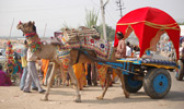Decorated Camel and Camel Cart